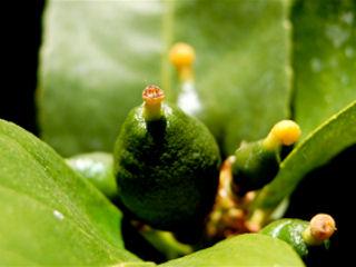 Egzotyczne rośliny w domach