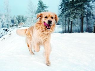 Specjaliści Brit doradzają w sprawie karmy dla psa.