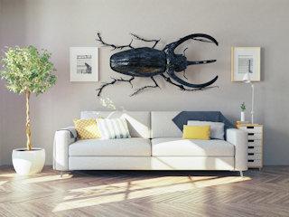 Sposoby na insekty domowe