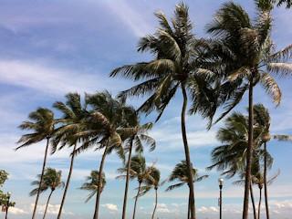 Poradnik dla meteopaty: gwałtowny wiatr