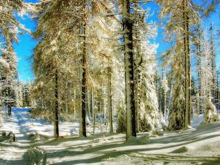 Poradnik dla meteopaty: zimny front