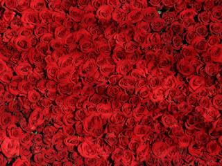 Kolory kwiatów i ich znaczenie – jakie róże dla narzeczonej podarować?
