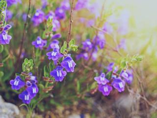 Kwiecień i maj - zobacz co kwitnie w tych miesiącach.