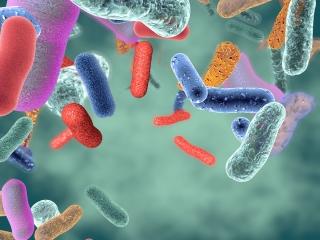 Rola mikrobioty w naszym organiźmie.