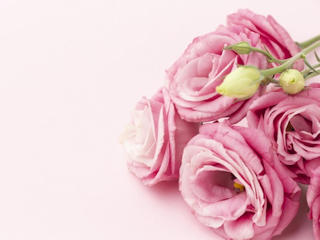 Różnorodne właściwości róży