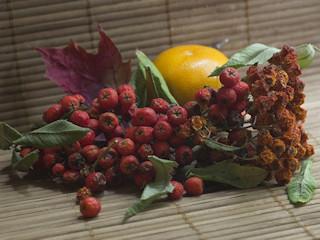 Skarb jesieni – jarzębina